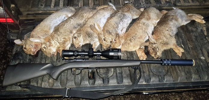 Land based rabbit control with a rimfire rifle.
